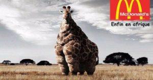la mal bouffe crée l'obésité