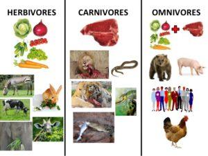 différents régimes alimentaires